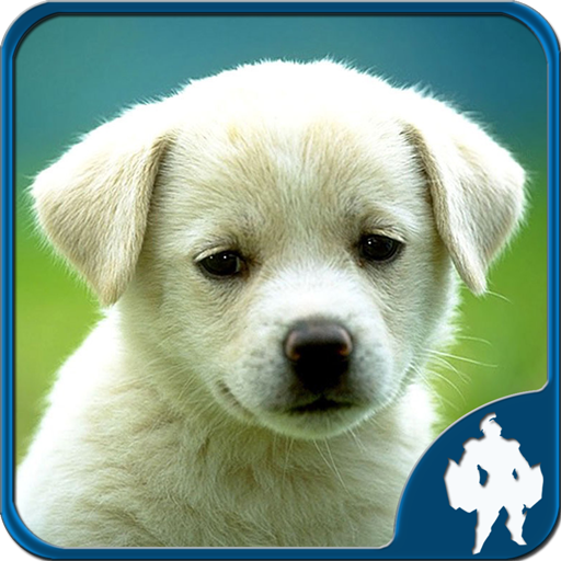Animal Jigsaw Puzzles  Apk Pro Mod latest 1.9.17