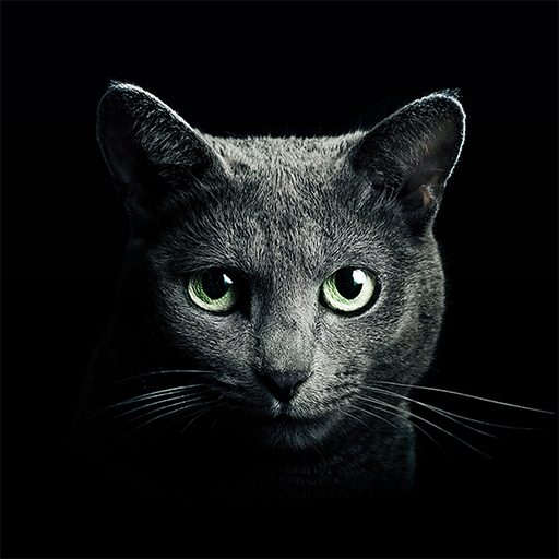 Find a Cat  Apk Pro Mod latest 5.9.3