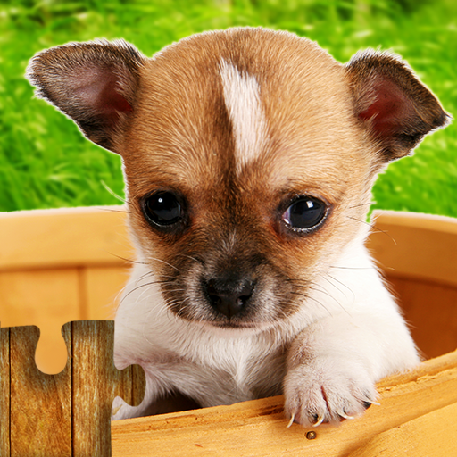 Dogs Jigsaw Puzzles Game – For Kids & Adults 🐶  Apk Mod latest 26.3