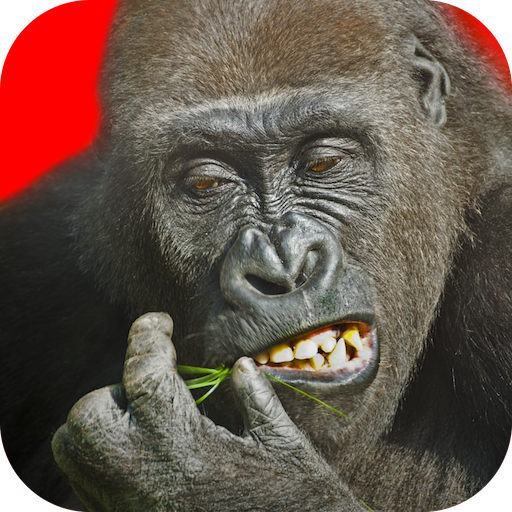 Flying Gorilla  2.143  Apk Pro Mod latest