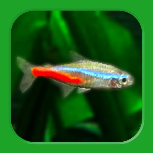 Tropical Fish Tank – Mini Aqua  2.91 Apk Mod (unlimited money) Download latest