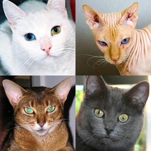 Cats Quiz – Guess Photos of All Popular Cat Breeds Apk Pro Mod latest