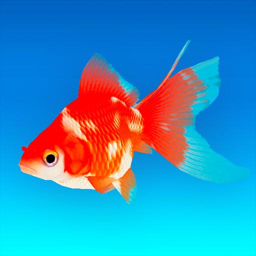 Goldfish 3D – Relaxing Aquarium Fish Tank 1.70 Apk Mod (unlimited money) Download latest