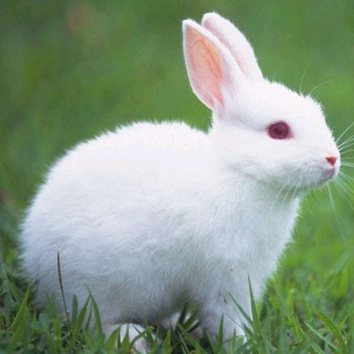 Talking Rabbit 1.1.8 Apk Mod (unlimited money) Download latest